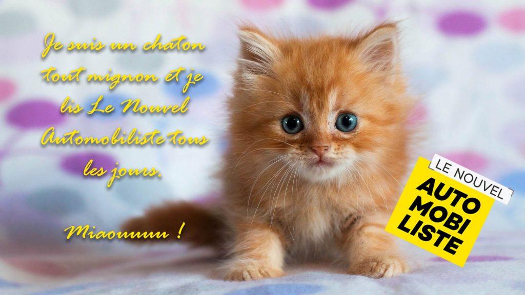 chaton tout mignon Lenouvelautomobiliste